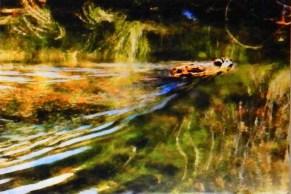 Simmons pond